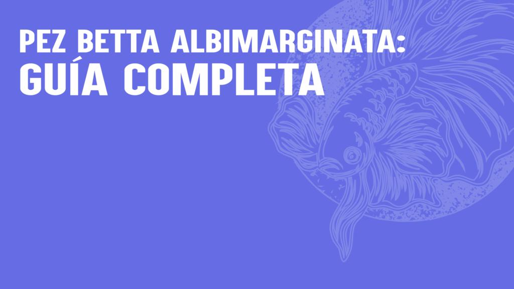 Pez Betta Albimarginata: guía completa