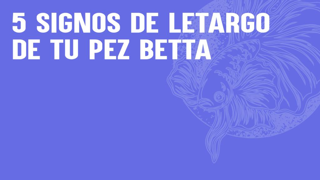 5 signos de letargo de tu pez betta